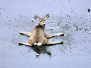 Insanely Intoxicated Deer on the Ice